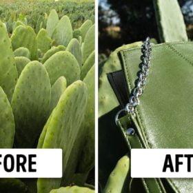 Чанта от кактус